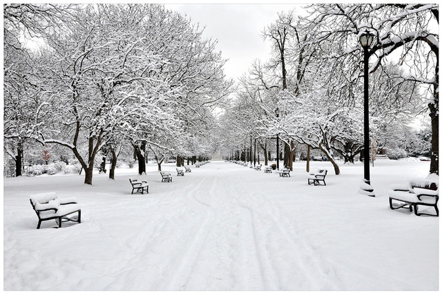 White-and-black-snowy-park-with-trees-winter-wall-picture-canvas-art-oil-painting-stretched-ready.jpg_640x640